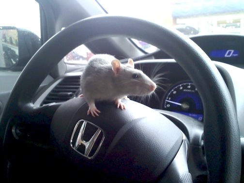 How to keep mice out of a car